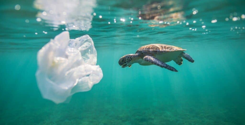 plastic pollution and sea turtle