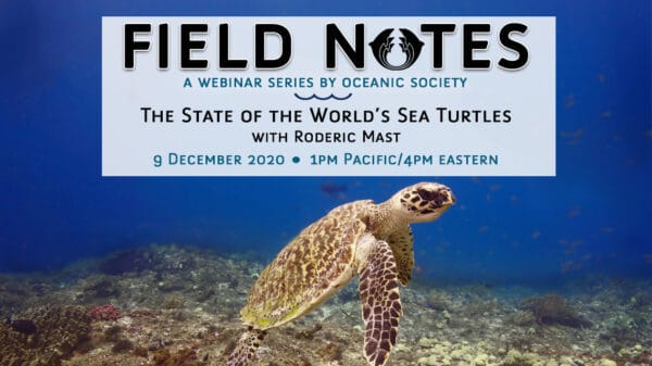 sea turtle webinar