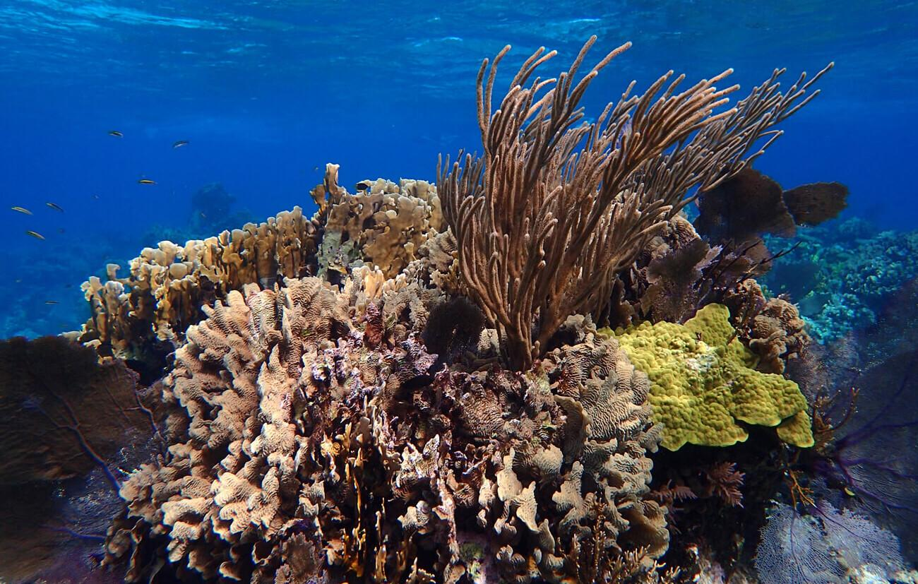 Belize has some of the healthiest reefs in the Caribbean. © Abel Coe