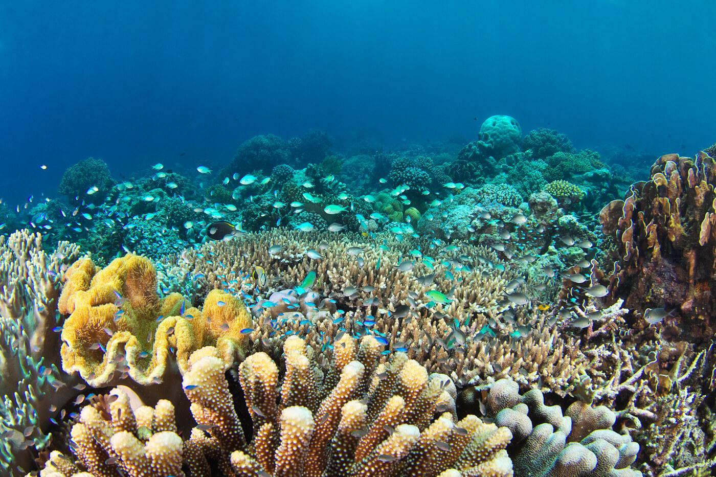 A coral reef in Raja Ampat, Indonesia. © Keoki Stender