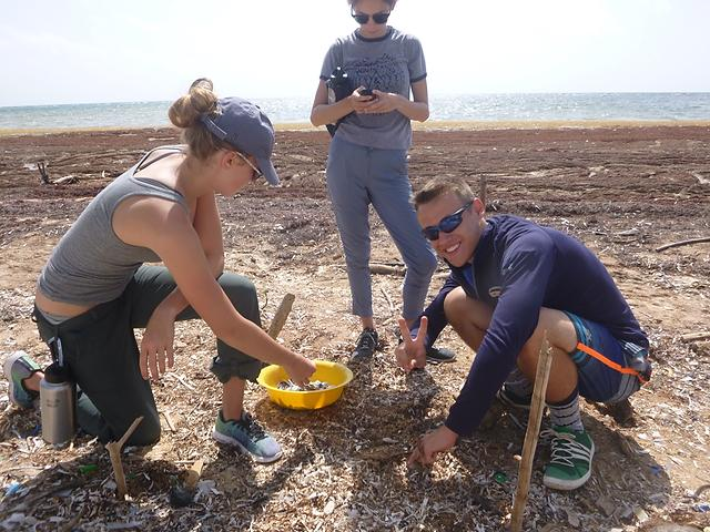 Students collect micro-plastic from within a transect to count.