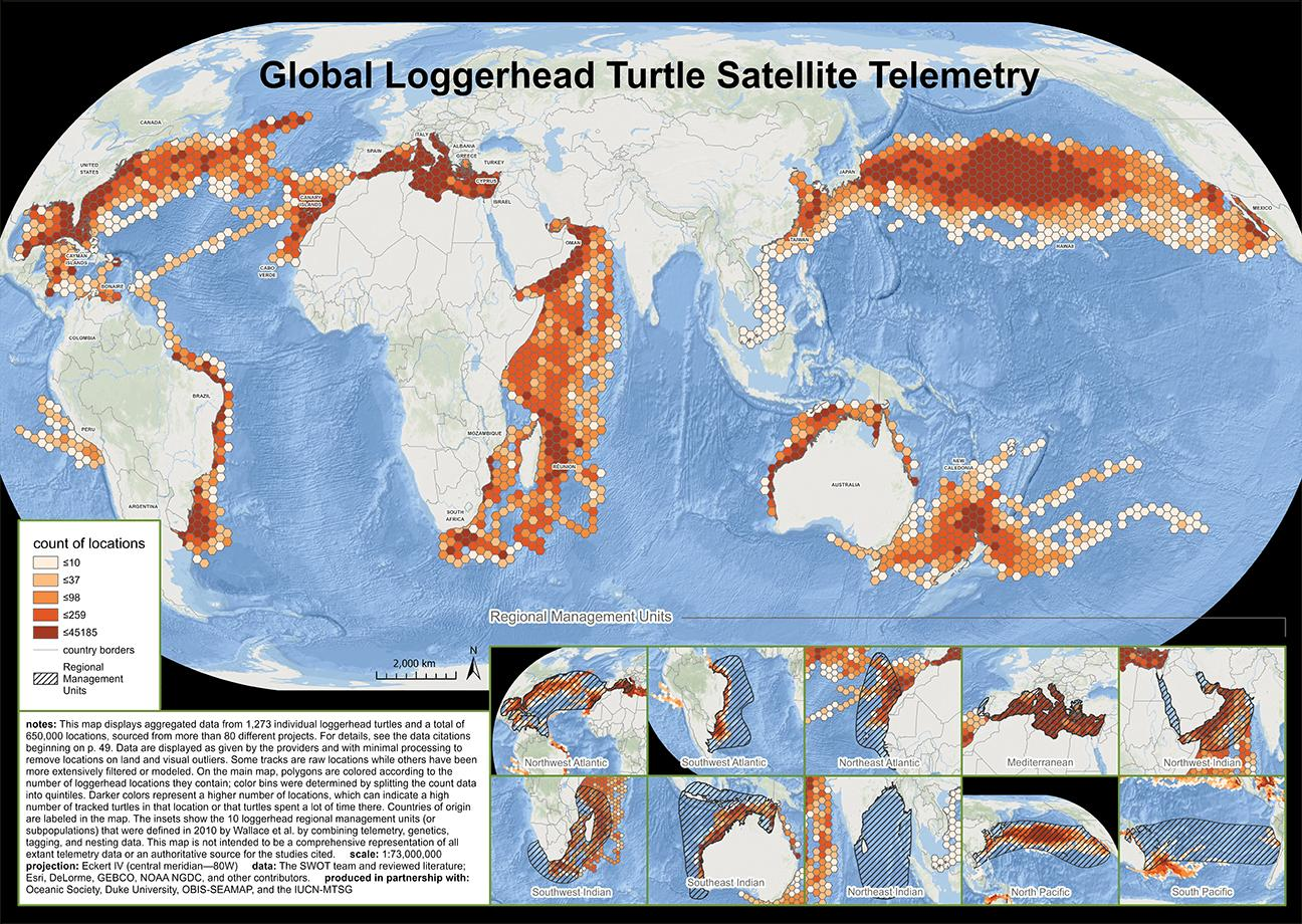 We published the first ever map of global loggerhead turtle satellite telemetry data in 2020.