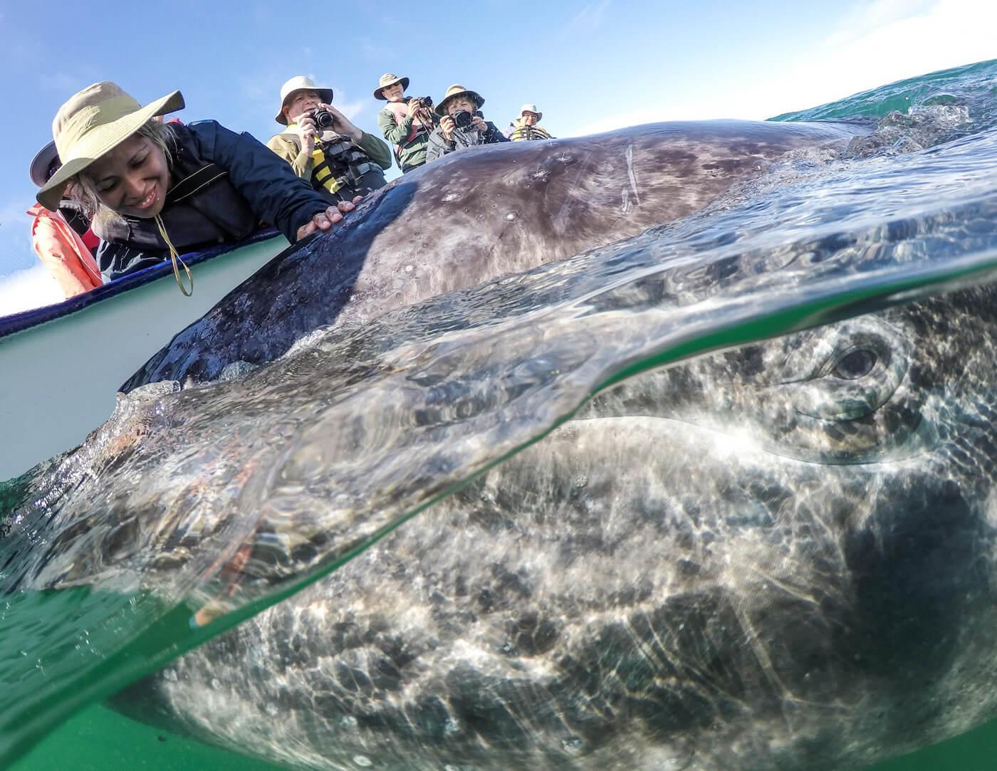 Passengers enjoy an intimate encounter with a gray whale. © Jose Sanchez