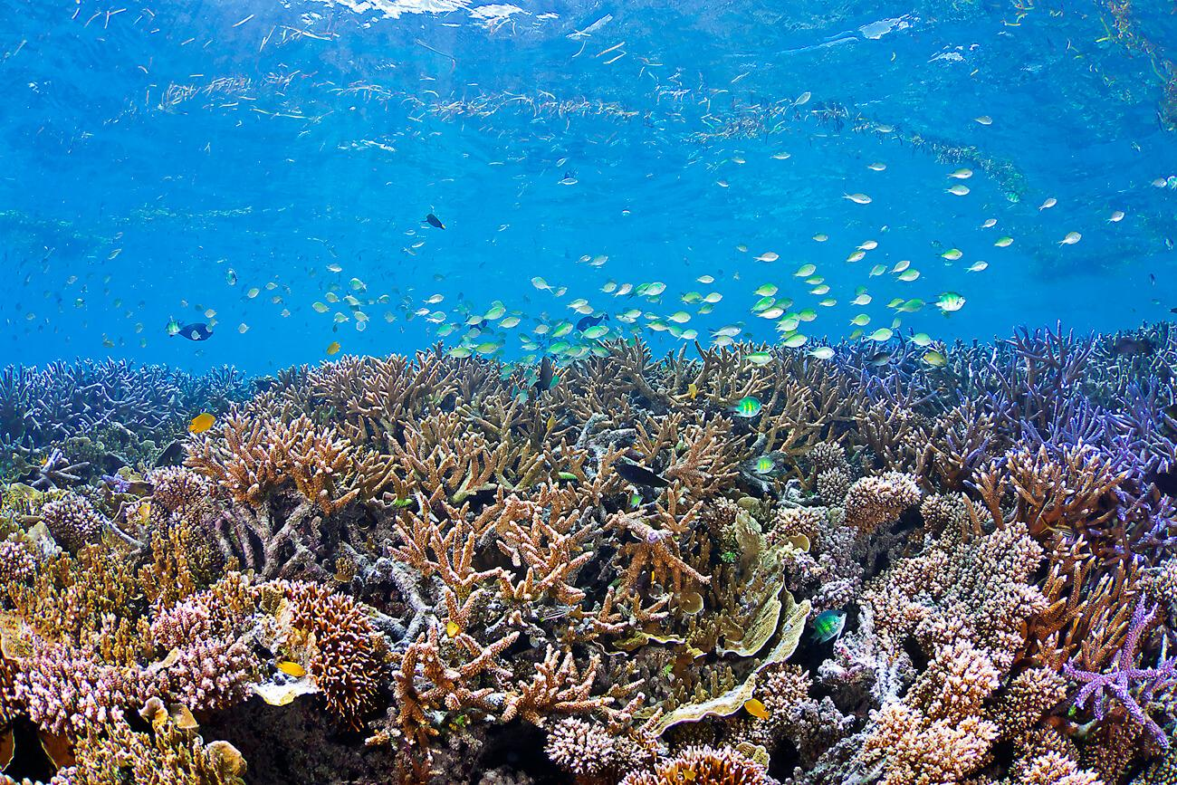 Palau has an impressive 400+ hard coral and 300+ soft coral species. © Keoki Stender