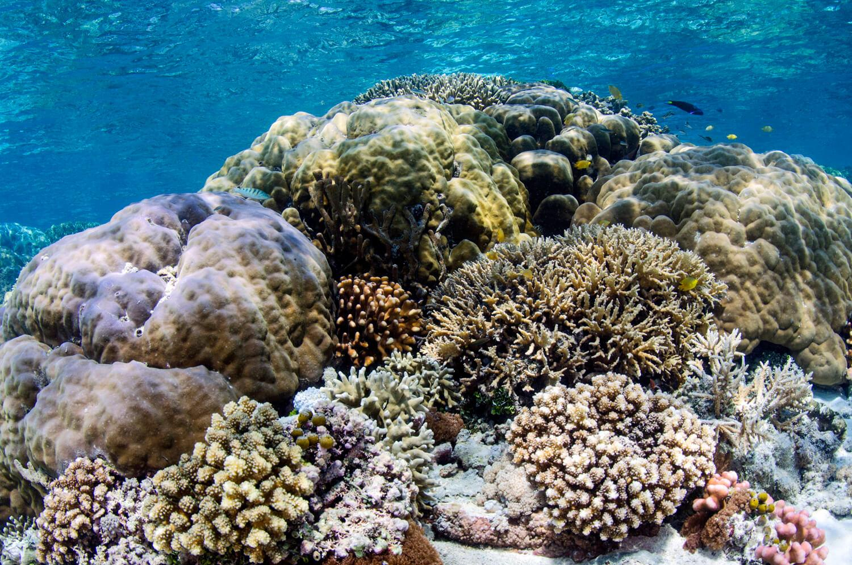 reef snorkeling Raja Ampat