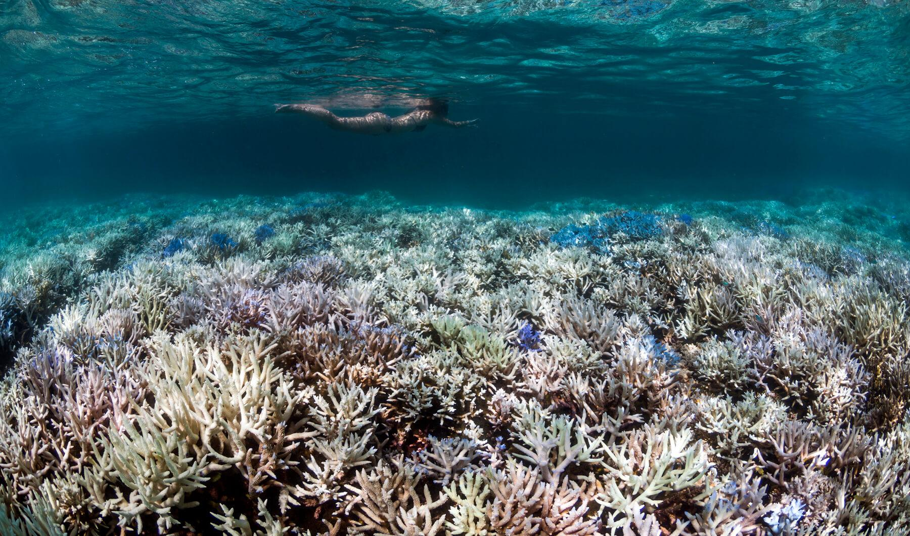 Chemicals in sunscreen make corals more susceptible to bleaching. © The Ocean Agency
