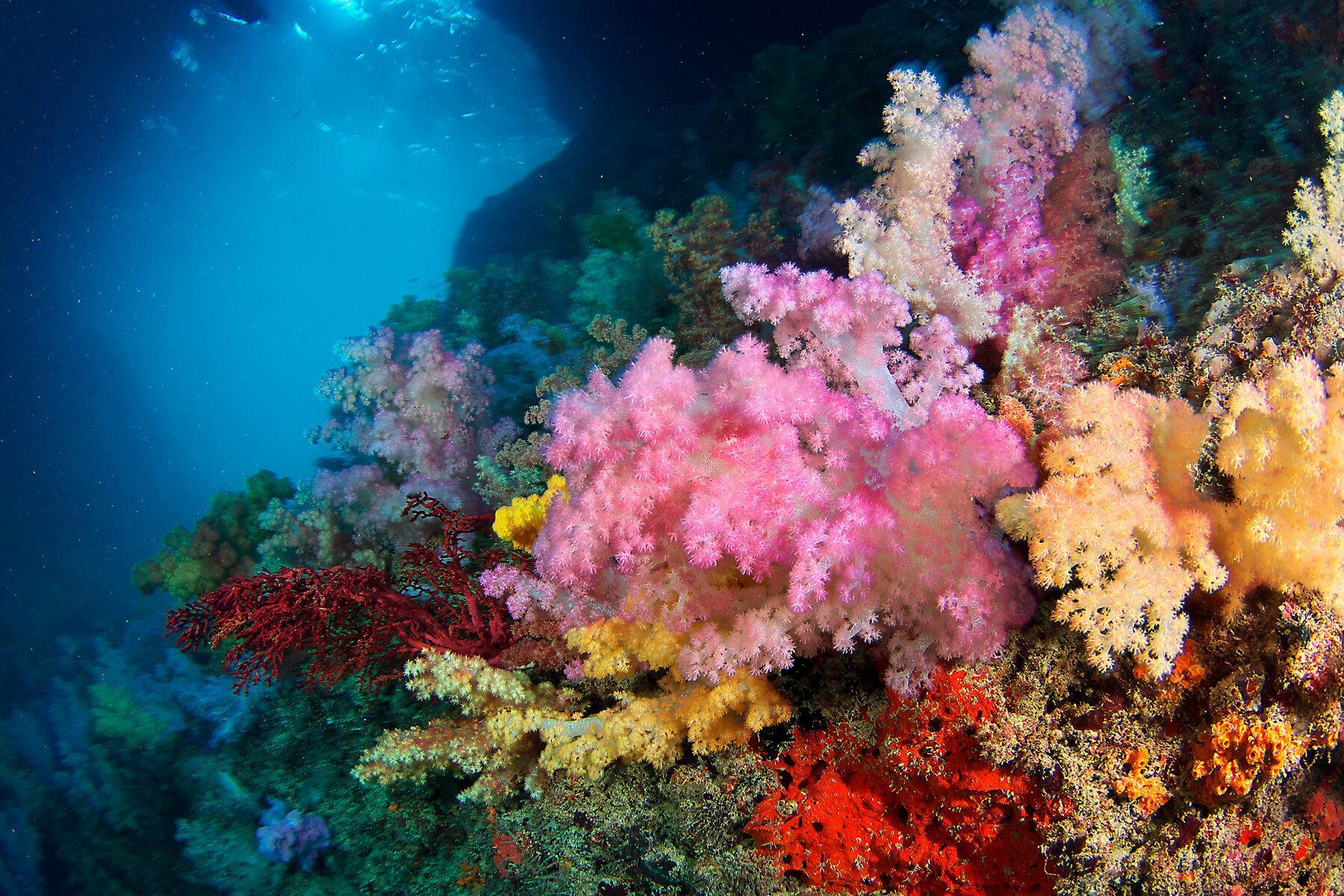 Soft Coral Arch in Palau's Rock Islands. © Keoki Stender