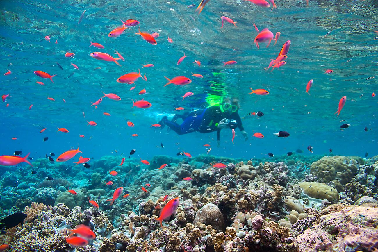 Excellent snorkeling conditions prevail in Palau. © Keoki Stender