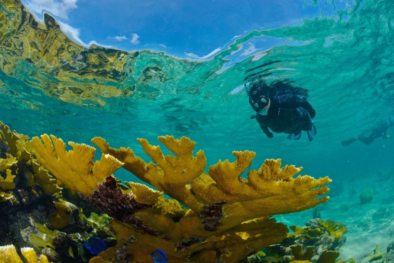 Cuba's Gardens of the Queen is home to the healthiest reefs in the Caribbean. © Noel Lopez