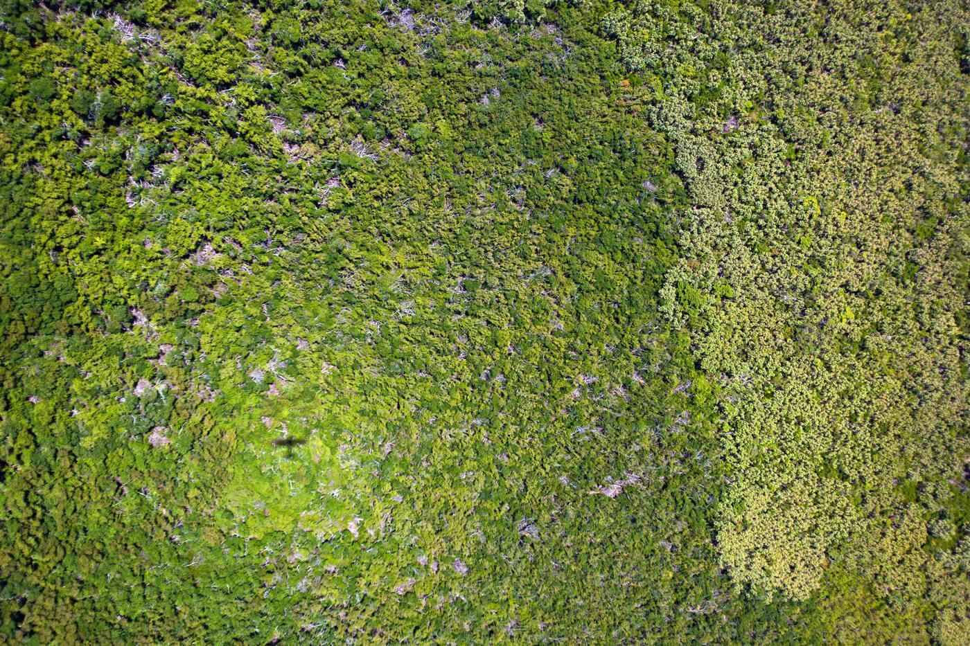Belize is part of the Mesoamerican forest hotspot. © Tony Rath / tonyrath.com
