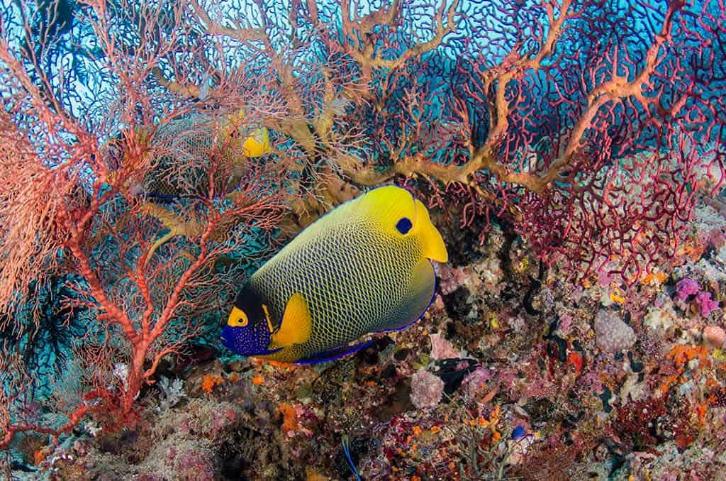 Halmahera is home to some of Indonesia's best coral gardens. © Pete Oxford