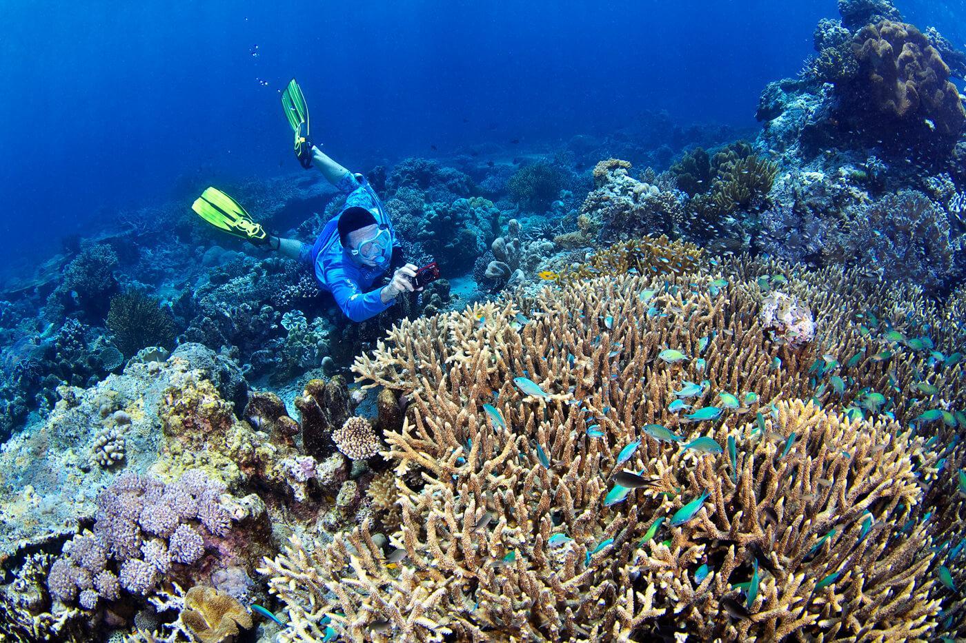 An Oceanic Society traveler photographs blue chromis on the reef. © Keoki Stender
