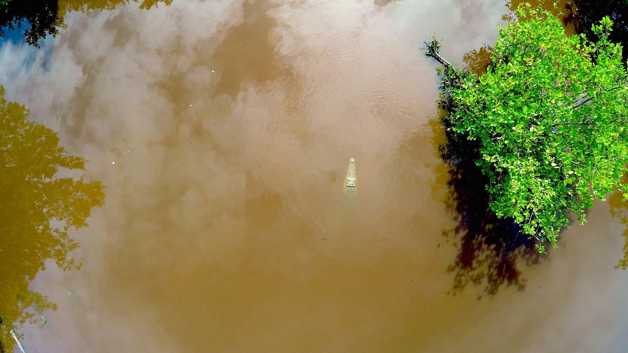 Blackbird Caye and the murky lagoon where American crocodiles reside. © Eric Ramos