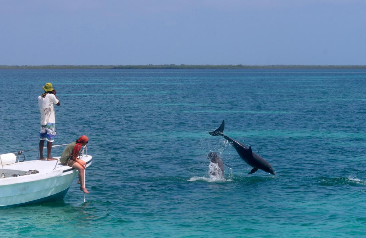 Observing bottlenose dolphins near the field station. © Vailett Müller