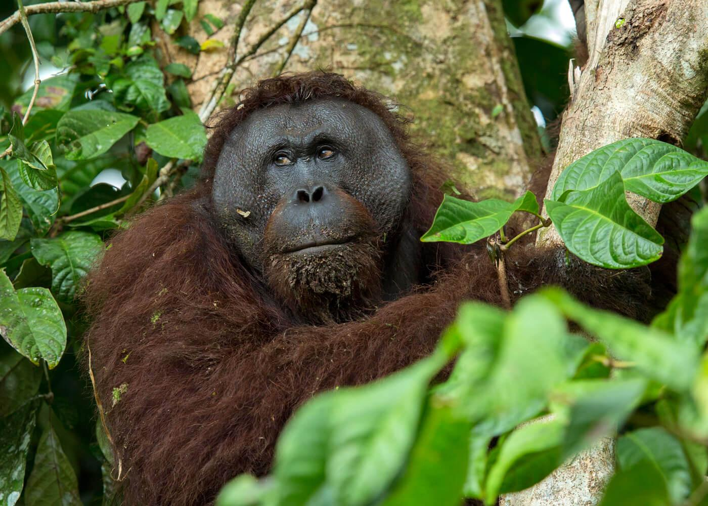 Our Borneo expeditions can easily be run for families and small groups. © Charles Ryan