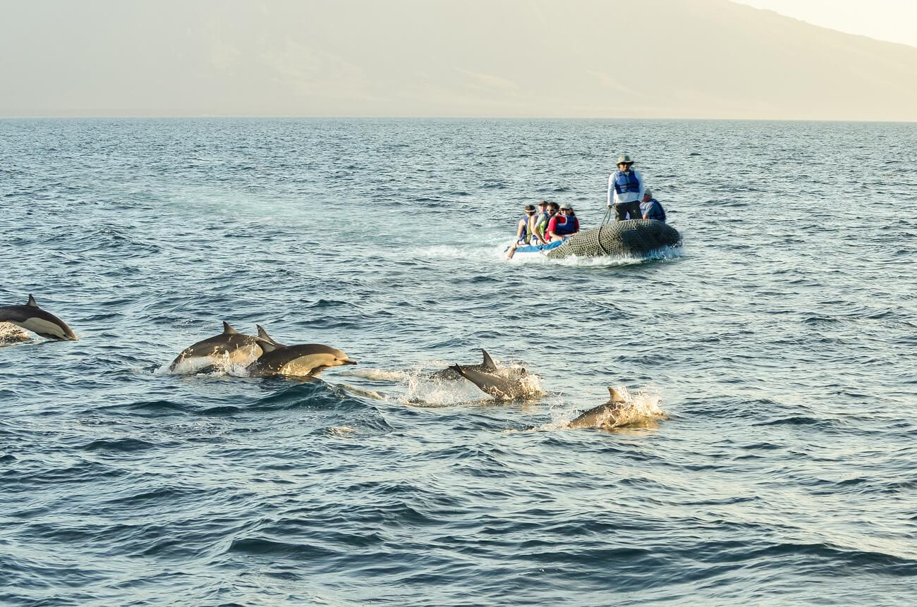 Common dolphins are one of around 24 marine mammal species found in the Galápagos.
