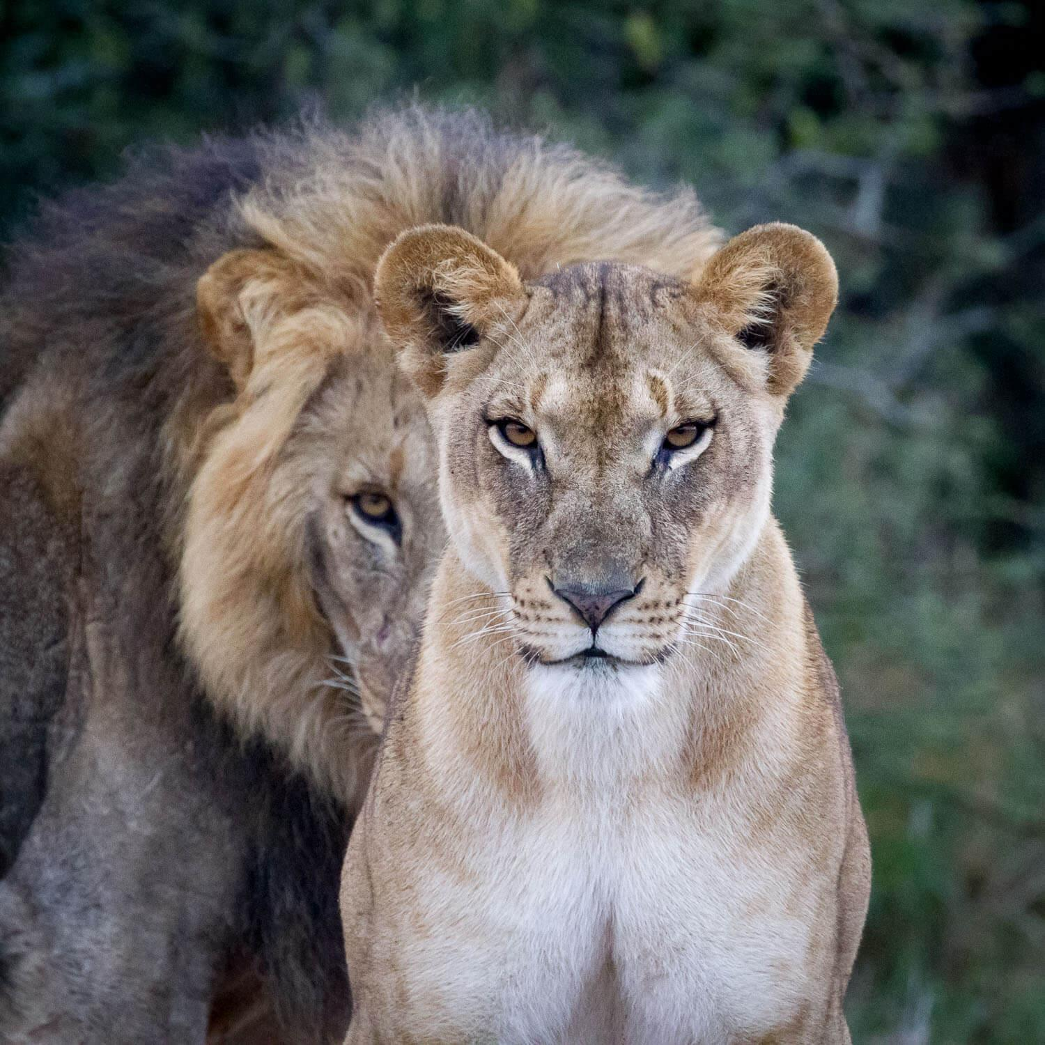 """Our expedition offers the chance to see all of the """"Big Five."""" © Jaymi Heimbuch"""
