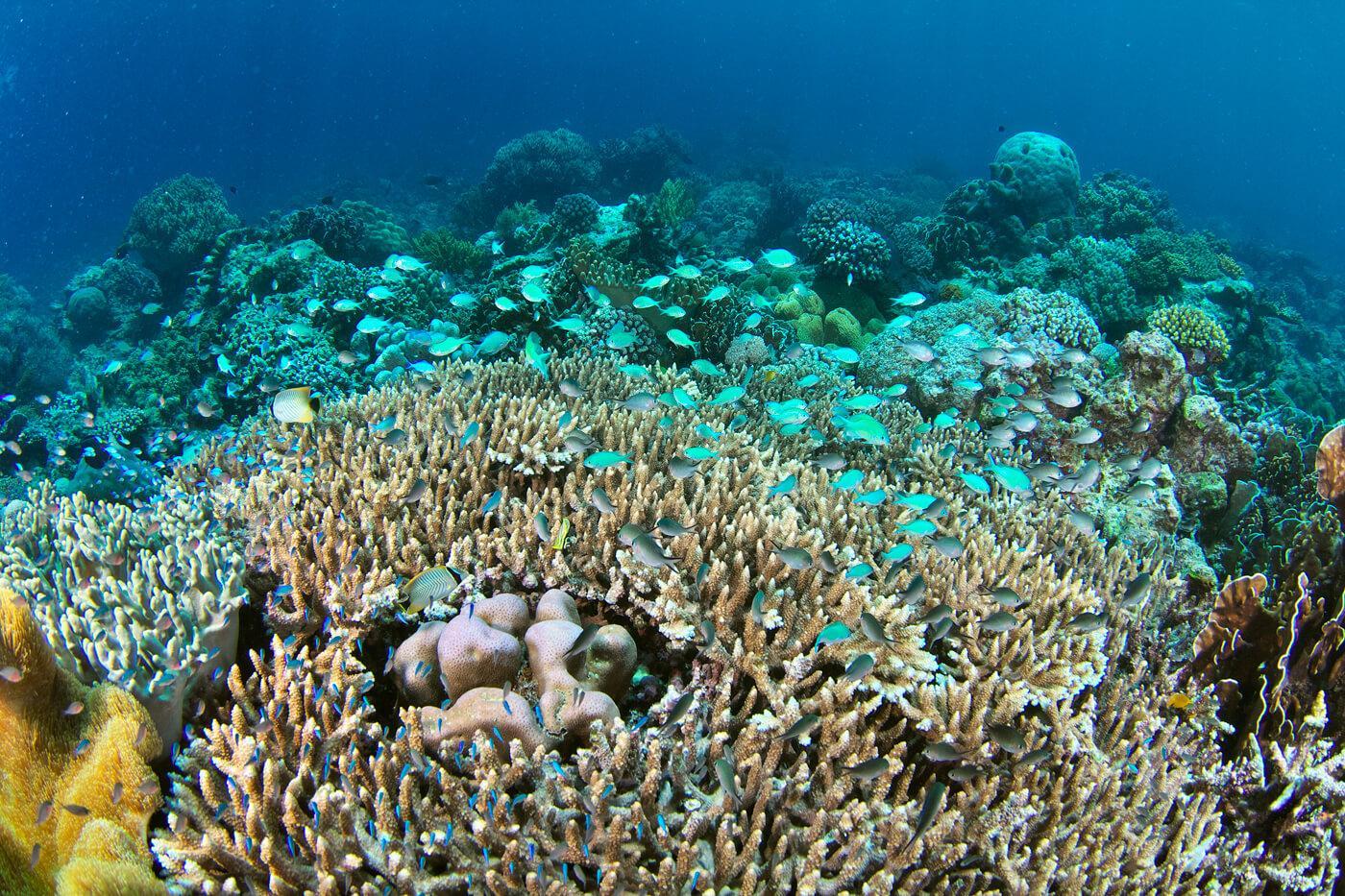 Explore dazzling coral reefs in Raja Ampat, Indonesia. © Keoki Stender