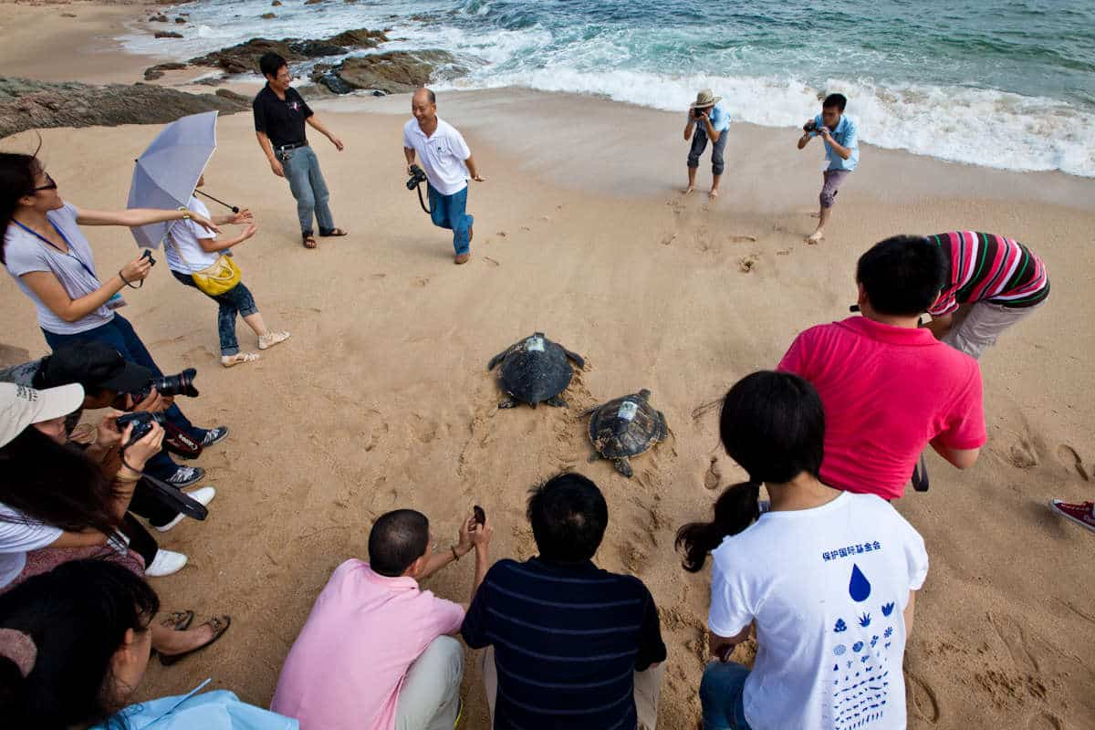 sea turtle release china