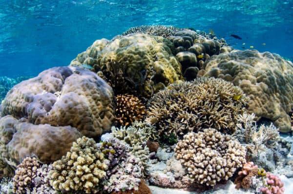 diverse coral reef in Raja Ampat