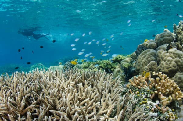 snorkeling in Raja Ampat Indonesia