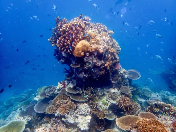 coral in Beqa Lagoon