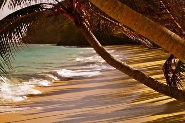 idyllic beach in Fiji