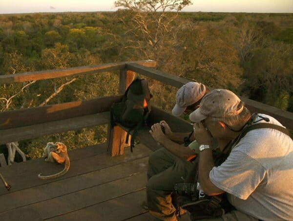 Travelers photograph howler monkey