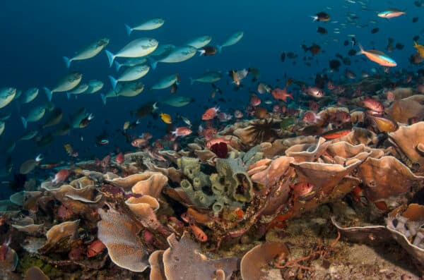 Diverse indonesian coral reef