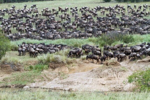 Kenya wildebeest migration safari