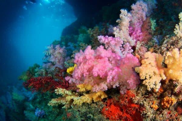 Soft coral arch Palau