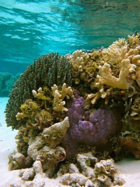 pristine coral reef Ulithi