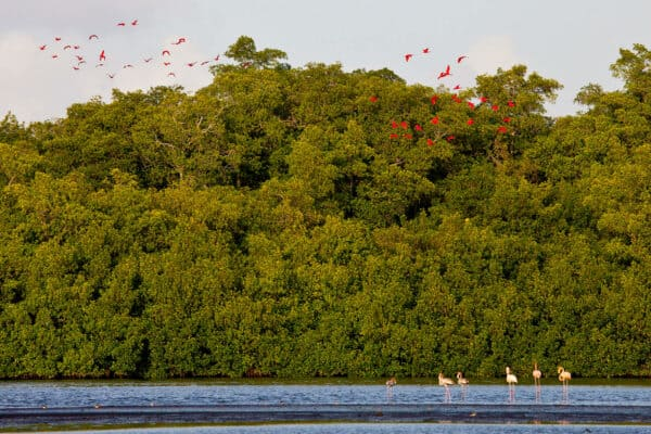 scarlet ibis and flamingoes