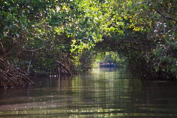 boat tour of Caroni Swamp