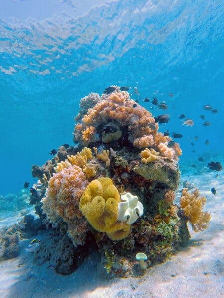 reef komodo marine park