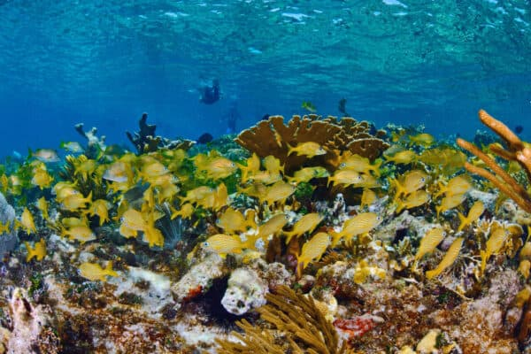 cuba gardens of the queen coral reef