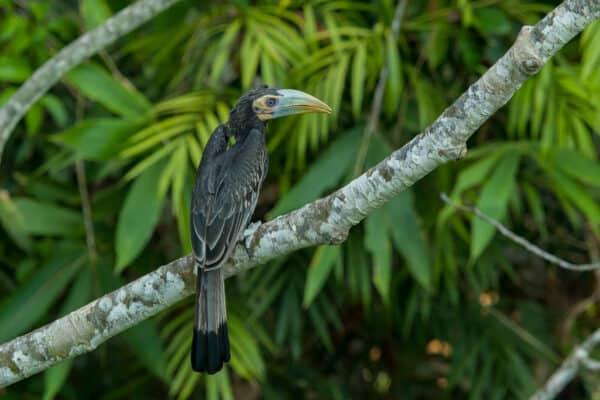 bird in danum valley