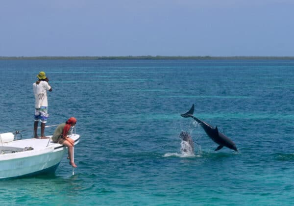 dolphin watching Belize