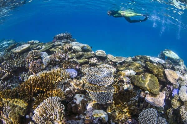 snorkeling Fiji's coral reefs