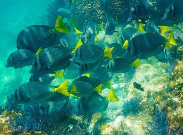 fish in sea of cortez