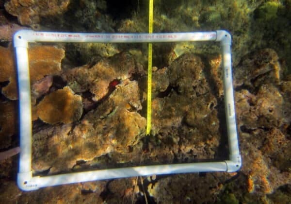 Volunteer coral reef monitoring