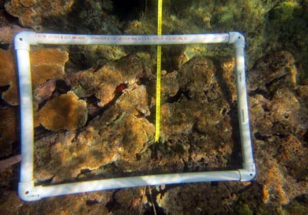 Volunteer coral reef monitoring
