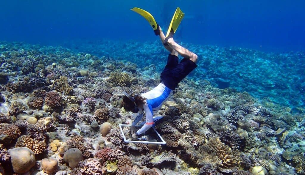 ocean volunteer trips