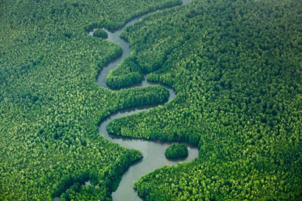 Osa Peninsula rainforest