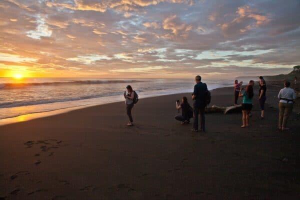 sunset sea turtle patrol