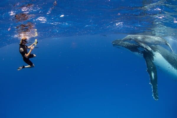 snorkelers with whales