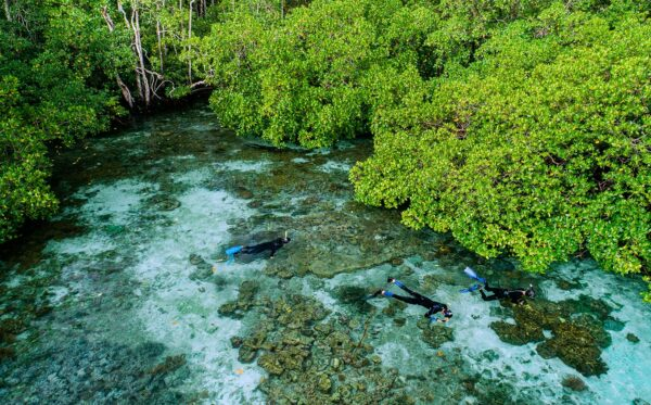 snorkeling in Alyui Bay Raja Ampat