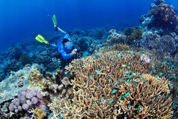 snorkeling in Indonesia
