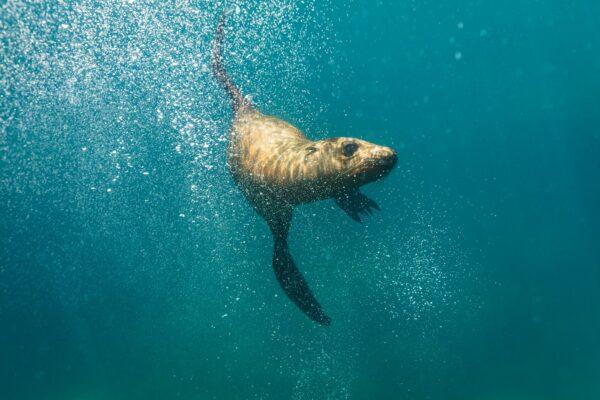 sea lion in baja