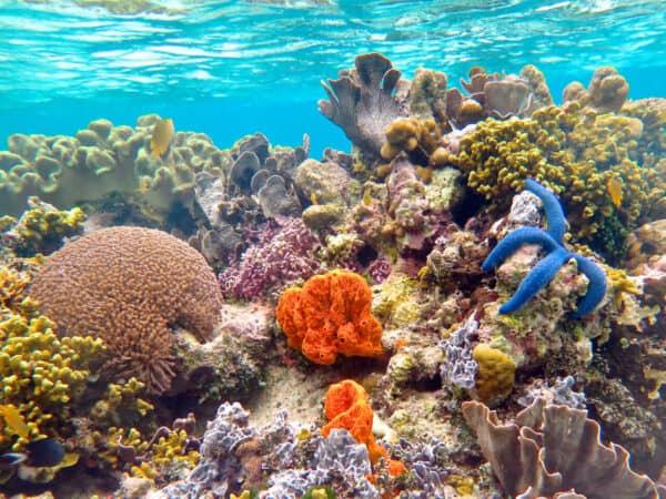 coral reef in Solomon Islands